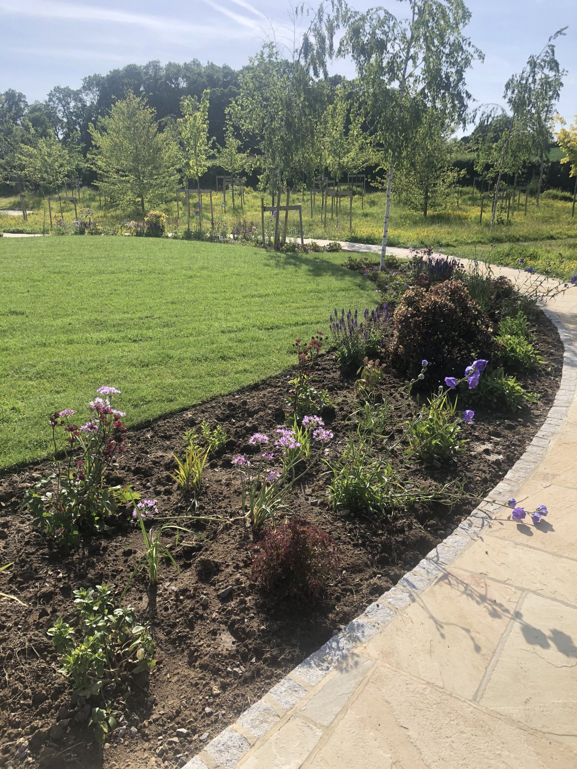 Ashmead Planting